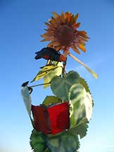 sunflower_0421