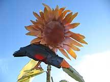 sunflower_0422